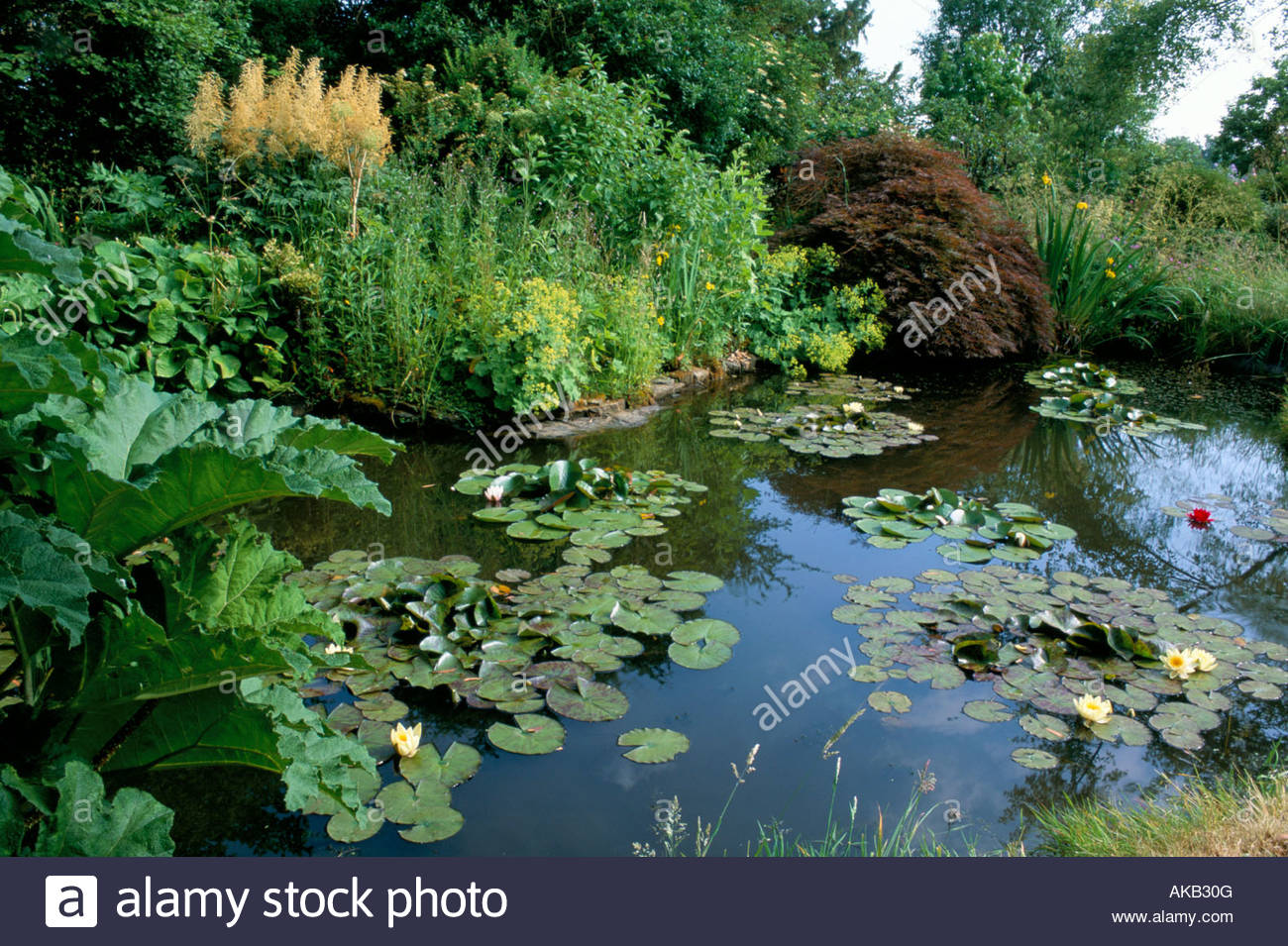 Private Garden Sussex Small Natural Informal Pond With