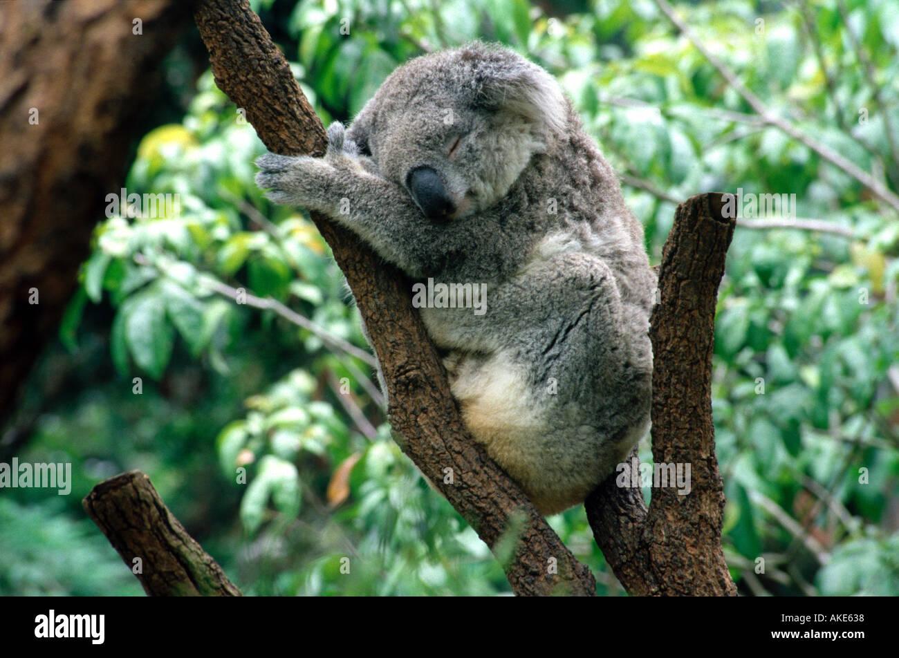 Koala park sanctuary coupons