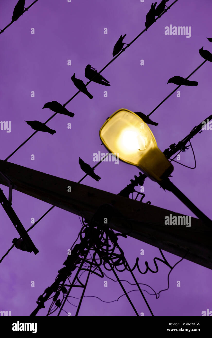 birds-on-a-wire-yellow-street-lamp-again