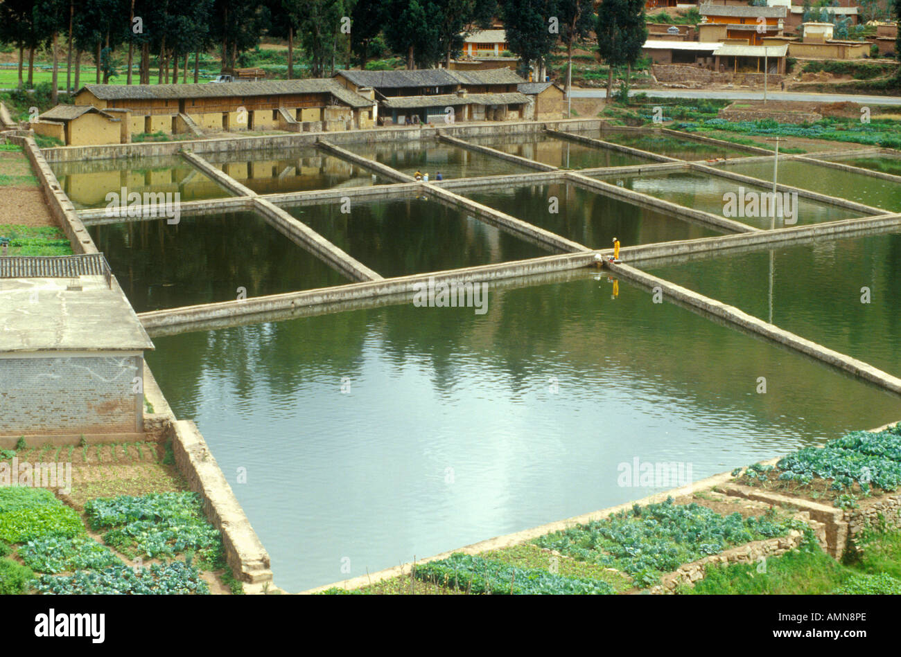 Aquaculture fish ponds in kunming people s republic of for Stocked fishing ponds