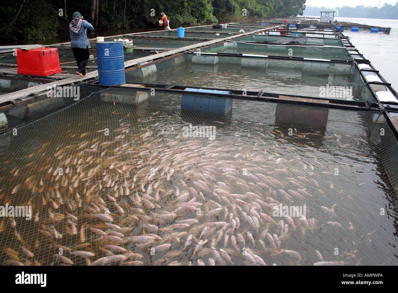 Fresh water fish farm in terengganu malaysia stock photo for Fish farm 3