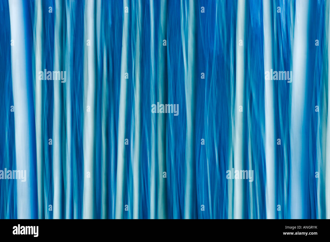 Abstract of trees, Jasper National Park, Alberta, Canada. Stock Foto
