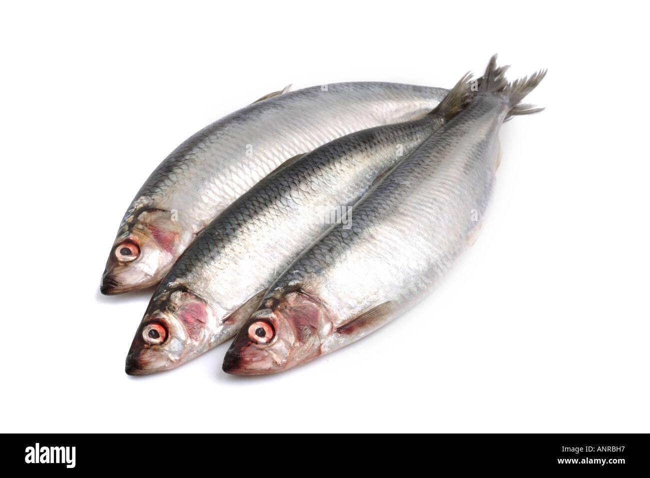 herrings-an-oily-fish-on-white-backgroun