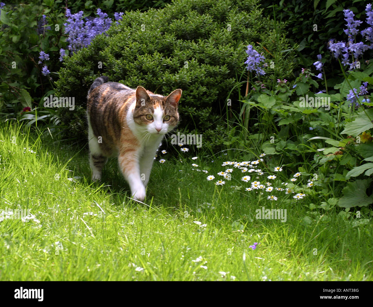 domestic-cat-in-a-garden-suffolk-uk-ANT3