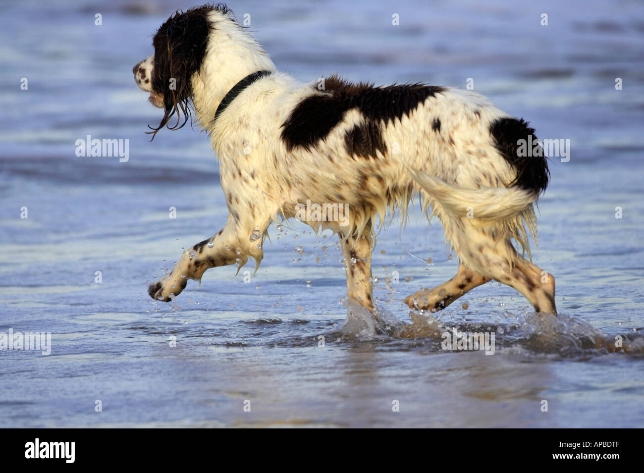 Best Dog Breed For The Sea