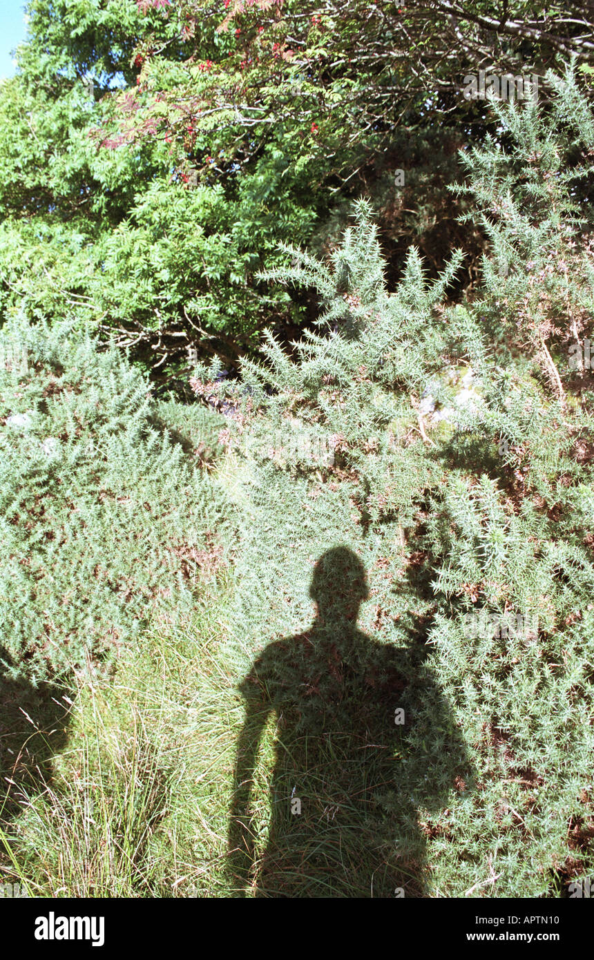 man's shadow in countryside Stock Foto