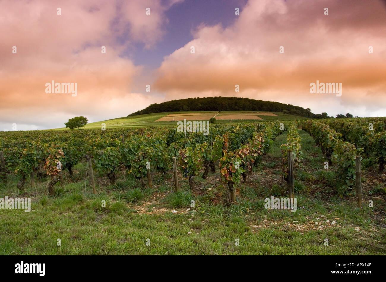 domaine-bonneau-du-martray-vineyard-on-t