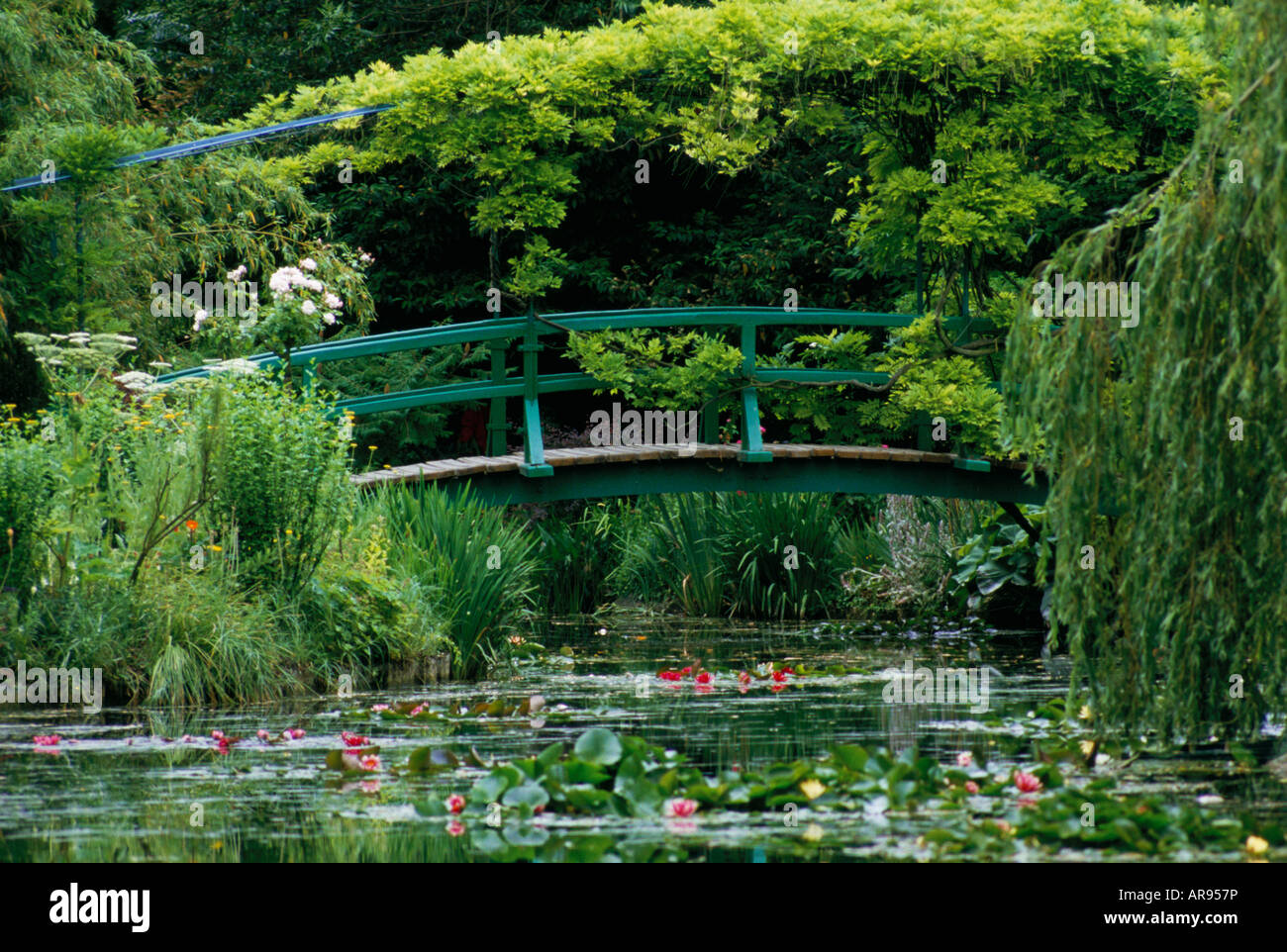 the-wisteria-covered-japanese-bridge-ove