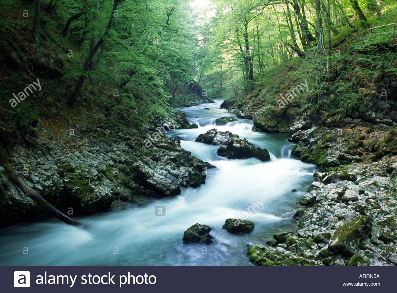 bled-slovenia-blejski-vintgar-a-gorge-ma