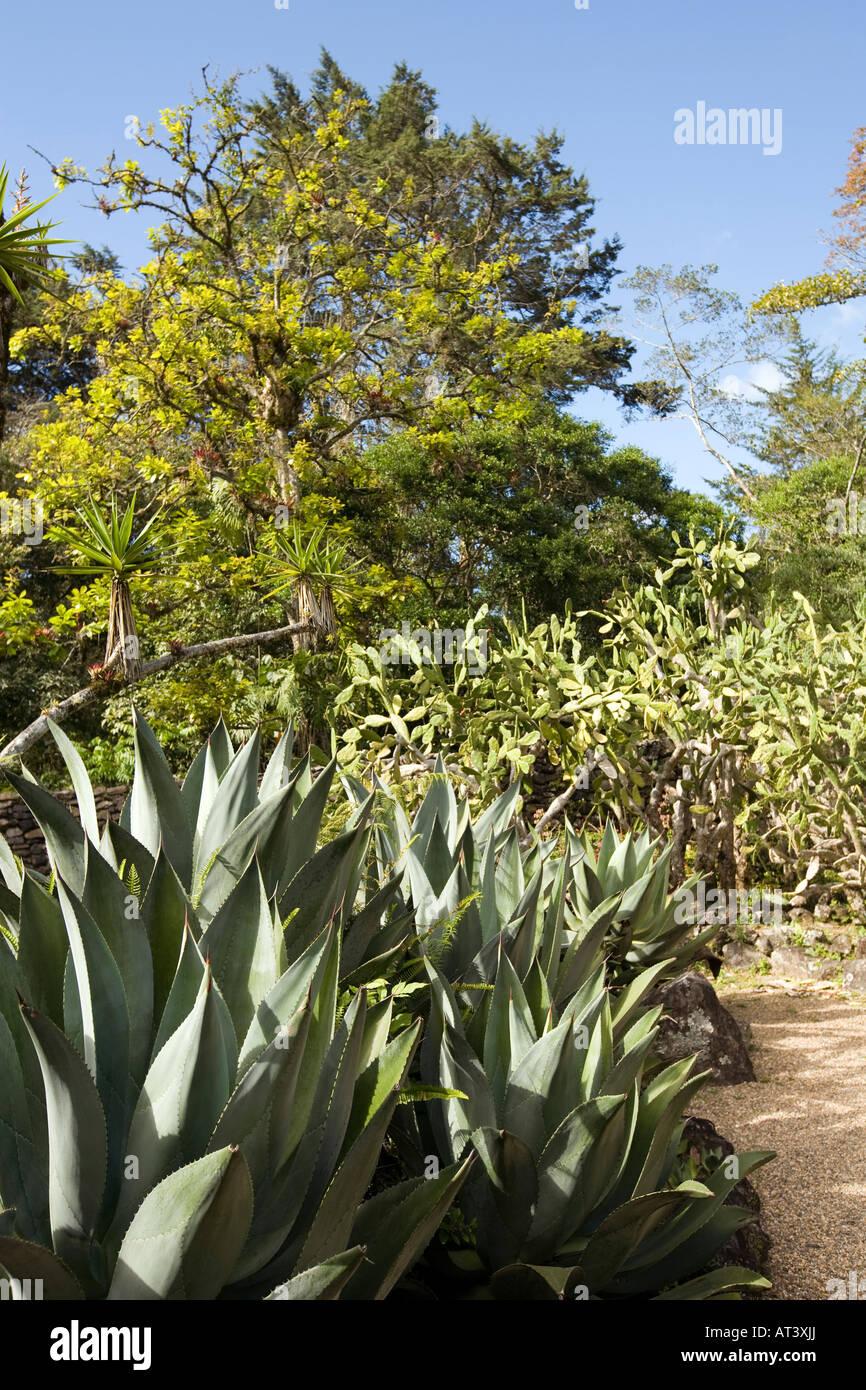 Costa Rica Cartago Lankester Botanical Gardens Cactus Garden Agave Stock Photo Royalty Free