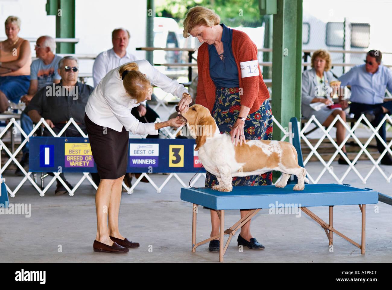 Dog Show Judge Check Teeth
