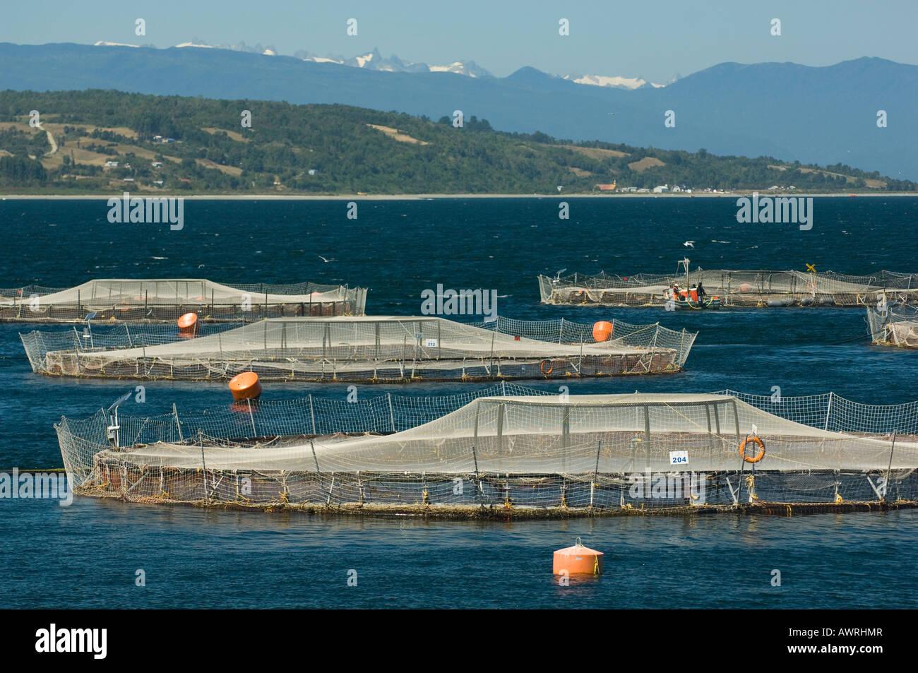 Aquaculture, salmon farm, Marine Harvest Ltd. , near ...