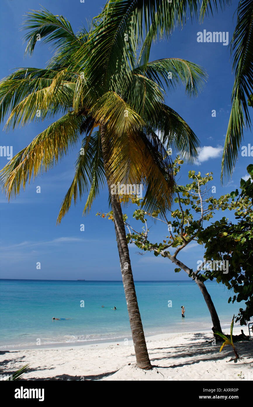 Jamaica Negril beach palm trees Stock Photo