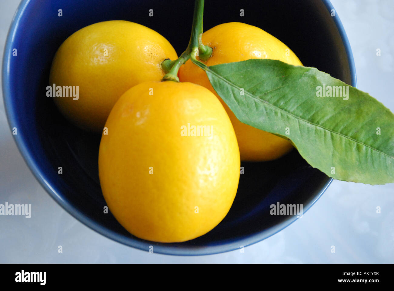 california-meyer-lemons-in-a-ceramic-bow