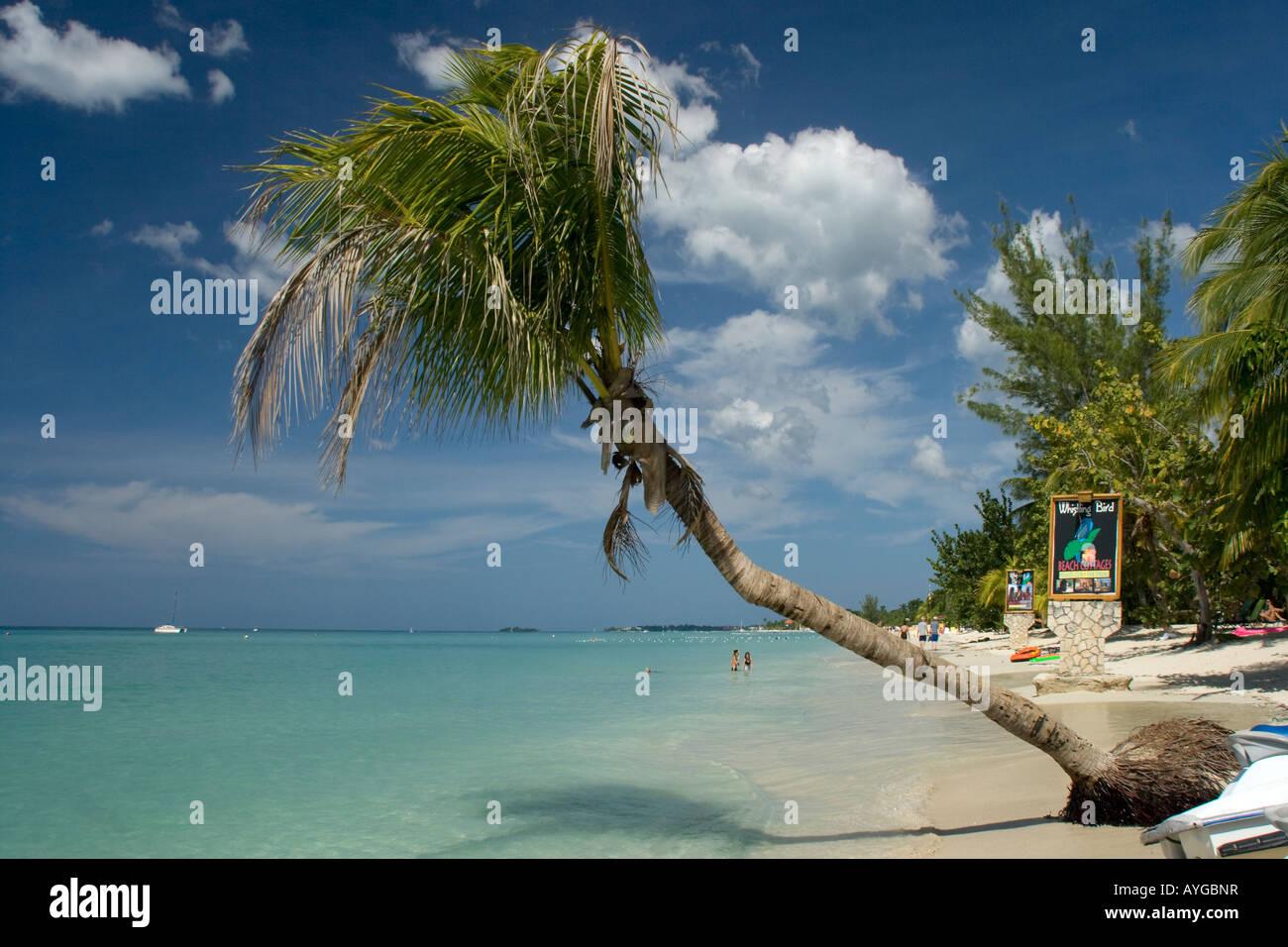 Jamaica Negril beach palm tree Stock Photo