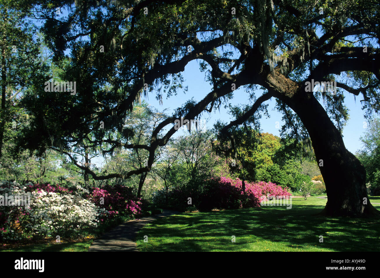 Brookgreen gardens in south carolina murrells inlet stock photo royalty free image 3171484 alamy for Brookgreen gardens south carolina