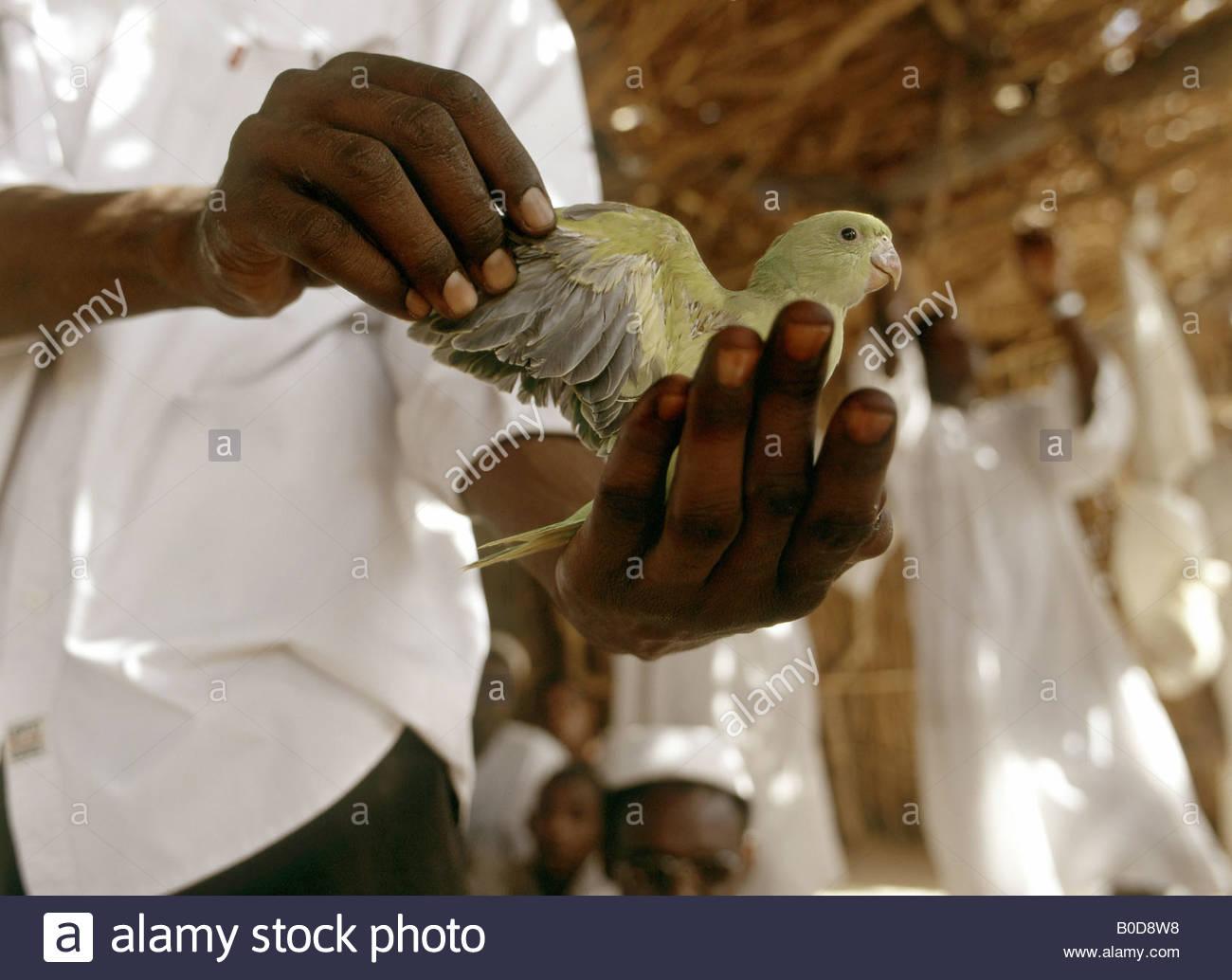 quail muslim single men Meet people looking for black muslim singles on lovehabibi - the top destination for single black muslims around the world.