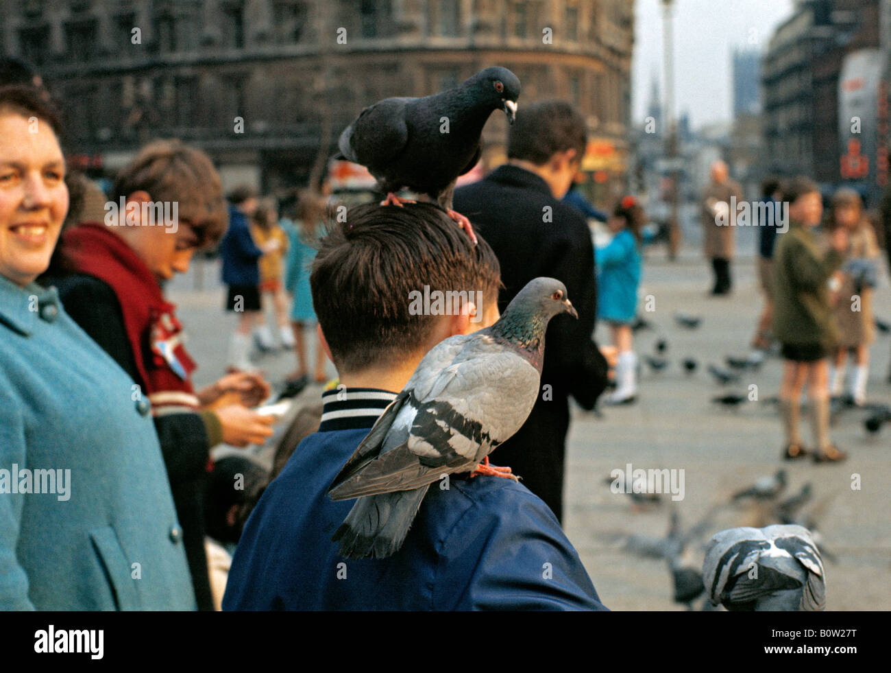 pigeons-perched-on-boys-head-shoulder-at
