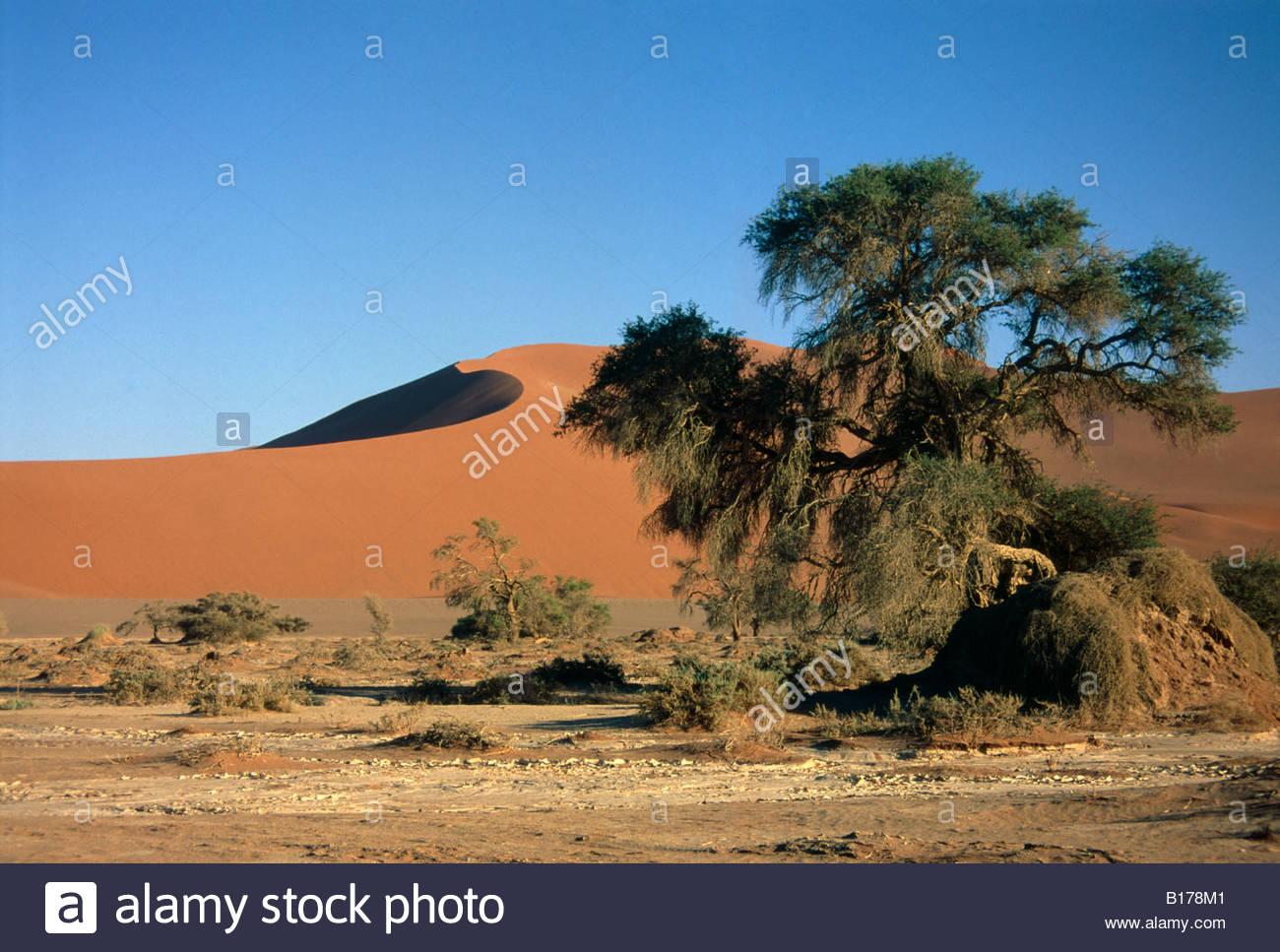 sesreim-namibia-namib-desert-dune-sea-on