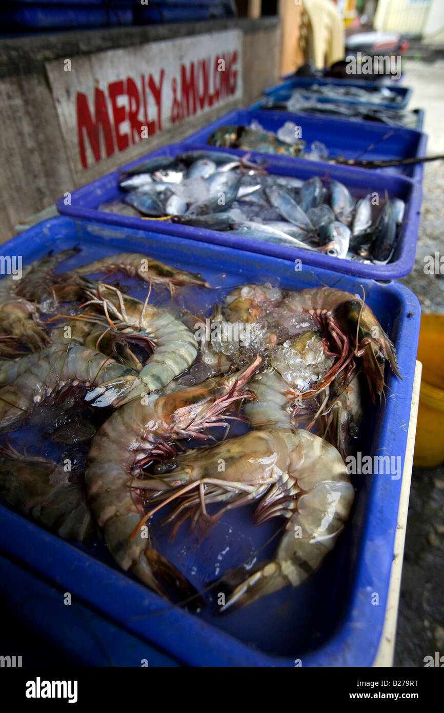 large fresh prawns in a seafood market near puerto galera
