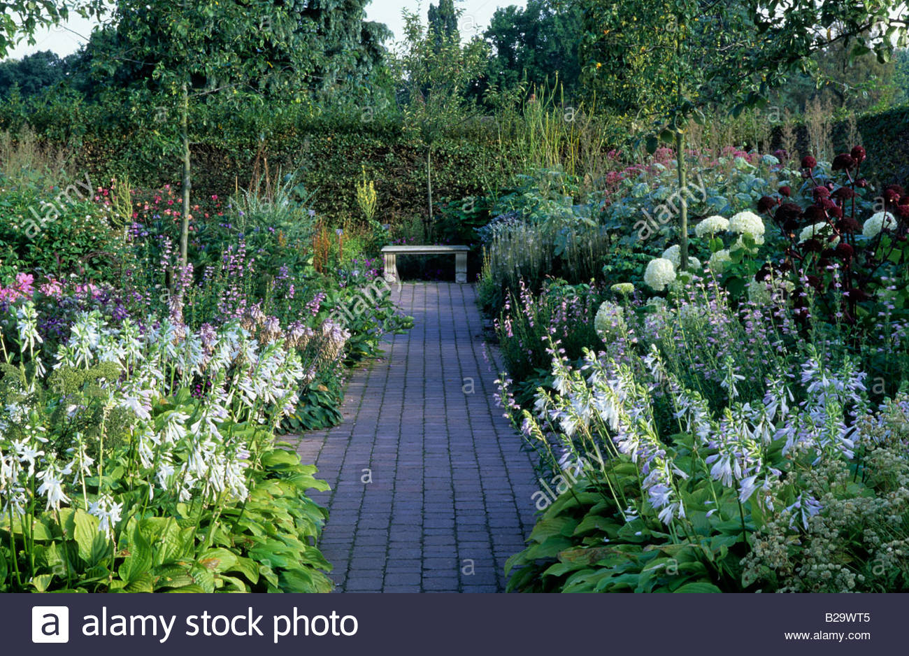 White garden with borders either side of path Bench