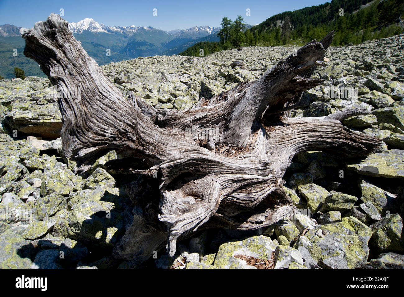 dead-tree-on-boulder-field-in-the-french
