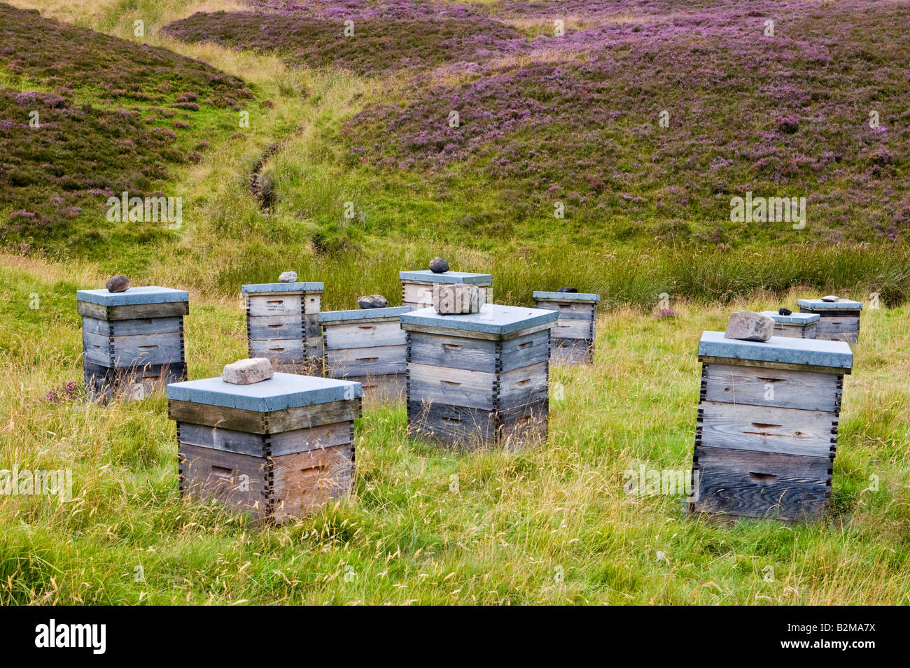 Watch How to Harvest a Bee Hive from the Wilderness video
