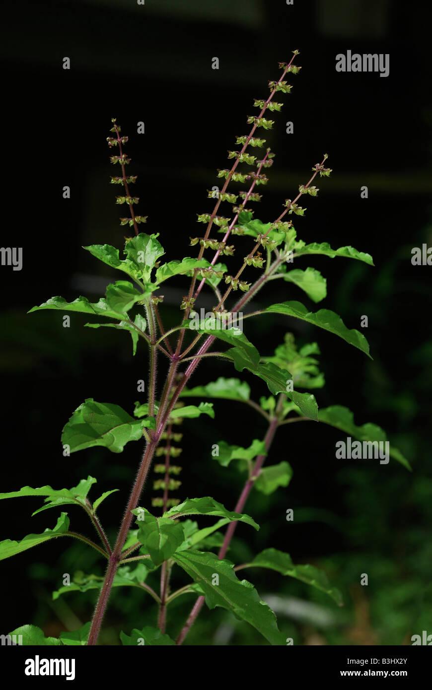 Medicinal plants in hindi pdf