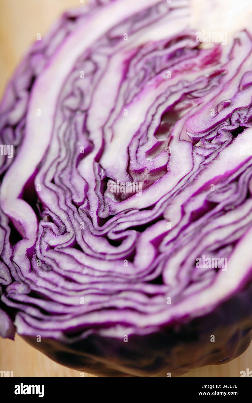 Close-up of a red cabbage Stock Foto