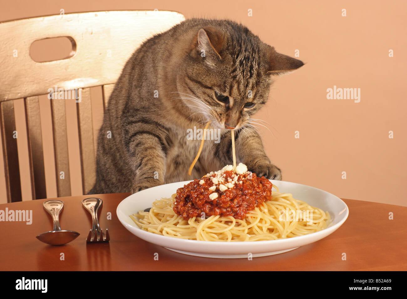 Older cats eating habits