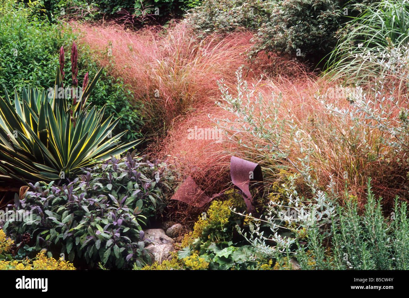 Yucca gloriosa 39 variegata 39 stipa tenuissima salvia for Structural plants for small gardens