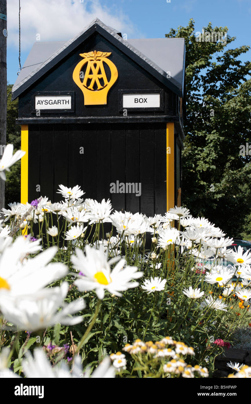 aa-box-at-aysgarth-with-dog-daisies-york
