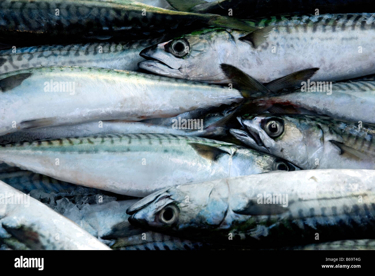 Mackerel for sale at a fish market stock photo royalty for Stock fish for sale
