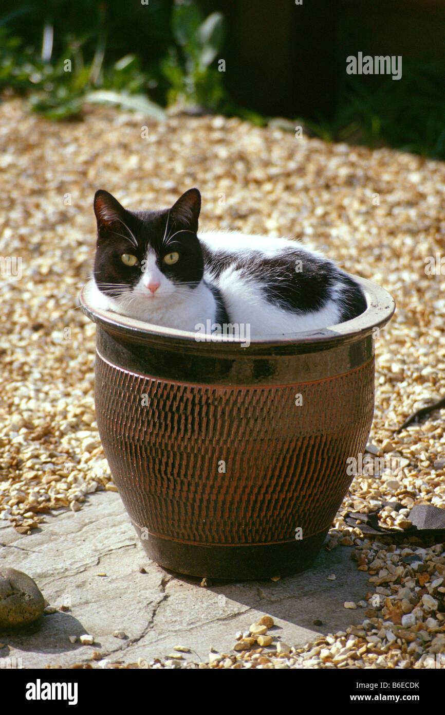 cat-curled-up-in-plant-pot-B6ECDK.jpg