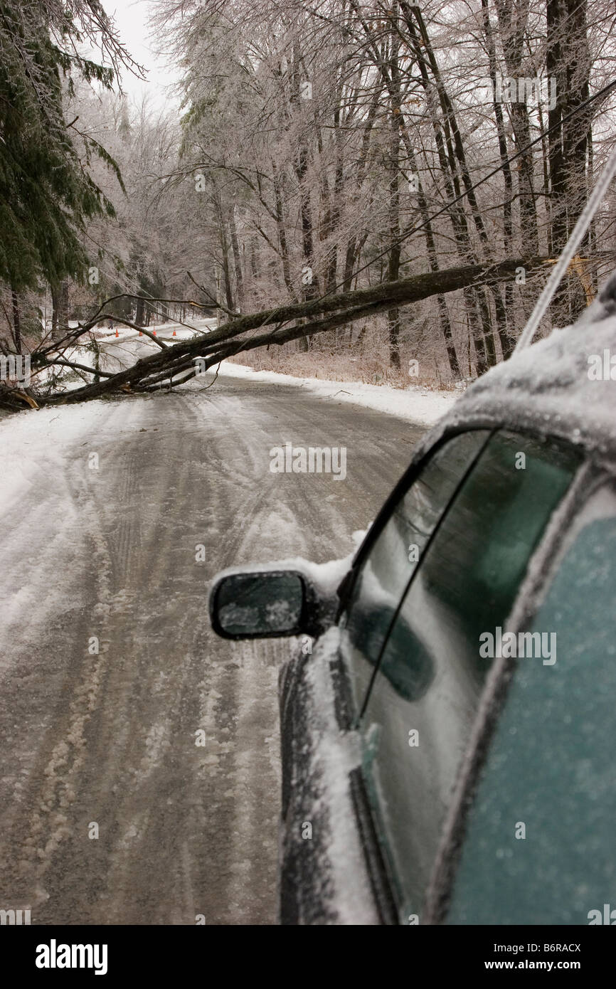 On a Tree Fallen Across The Road Analysis
