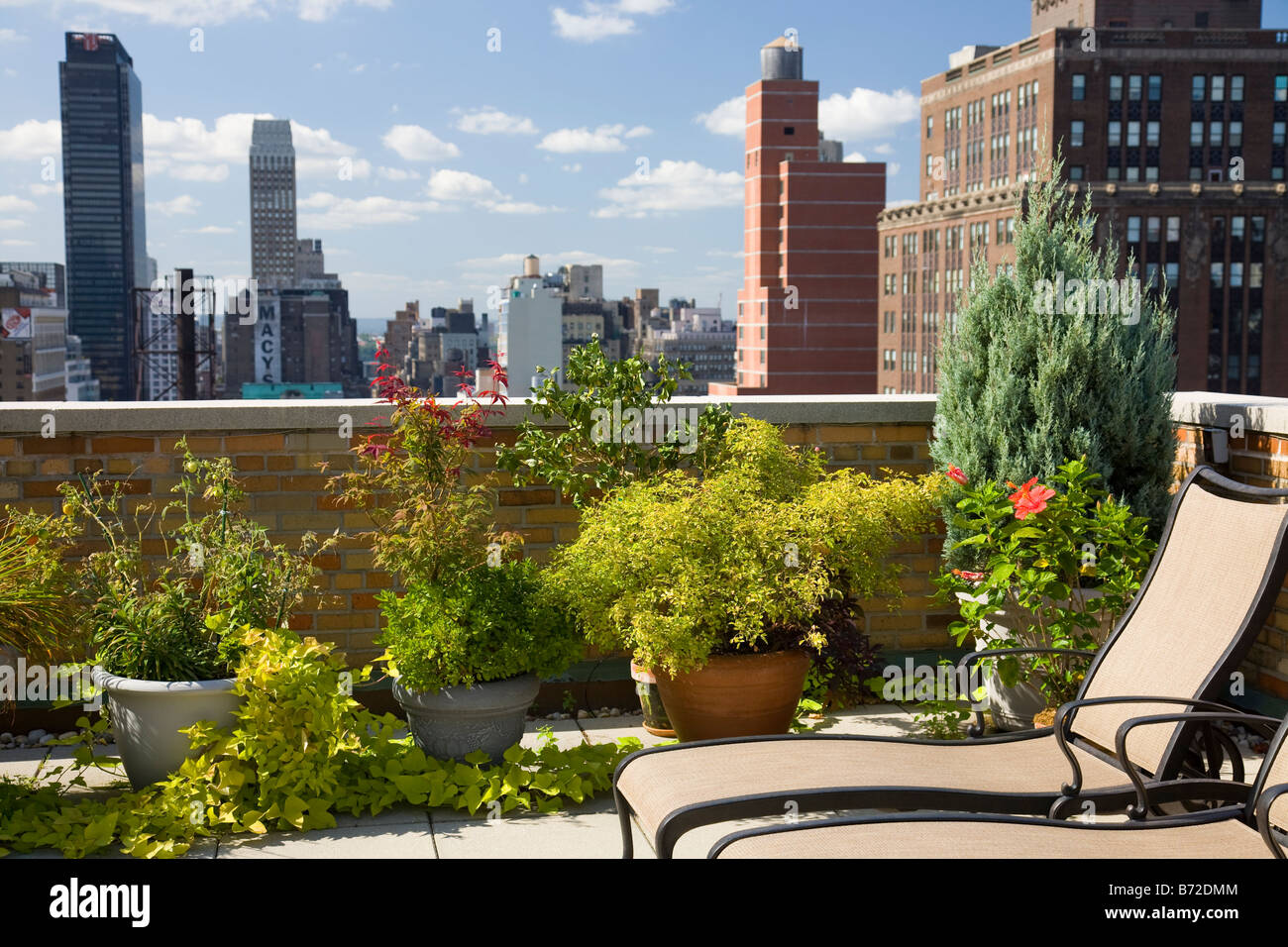 urban rooftop garden nyc stock photo royalty free image 21567636 alamy. Black Bedroom Furniture Sets. Home Design Ideas