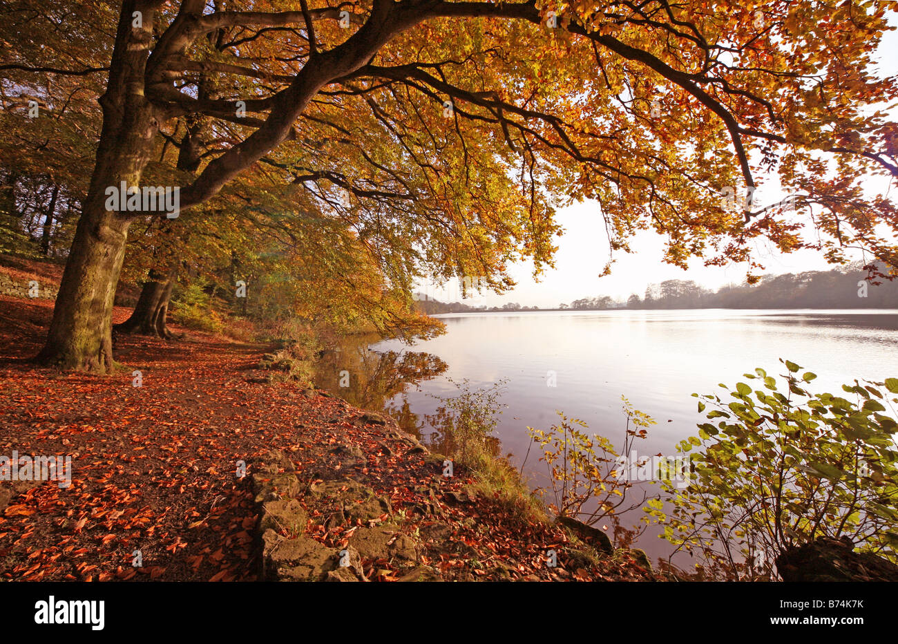 an-autumnal-scene-at-knypersley-pool-gre