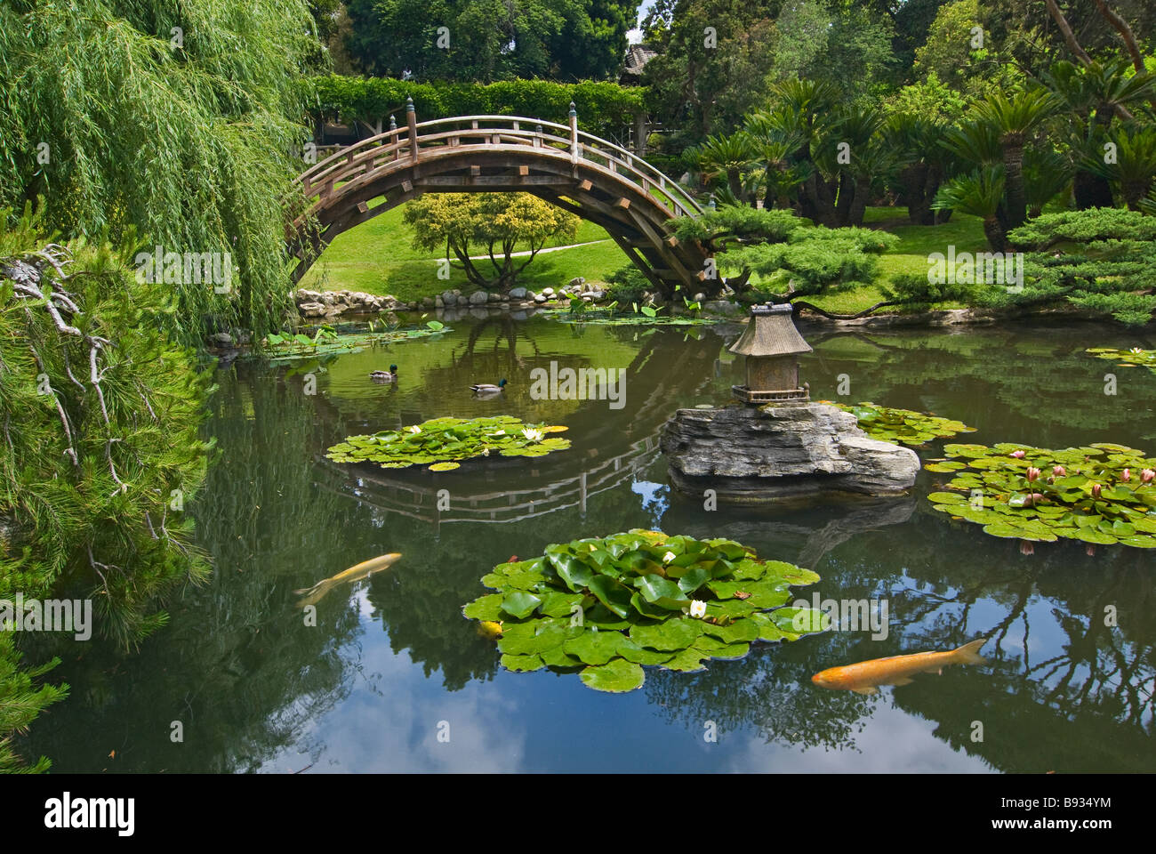 Japanese garden with moon bridge and lotus pond with koi for Japanese garden san jose koi fish