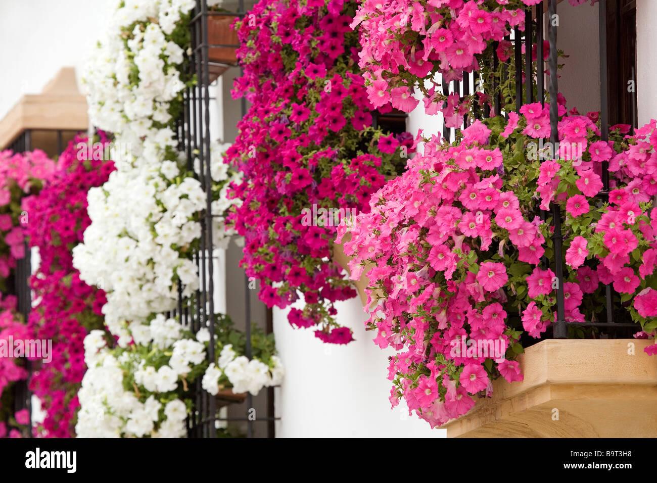 Balcones y rejas con flores c rdoba andaluc a espa a for Balcones decorados con plantas