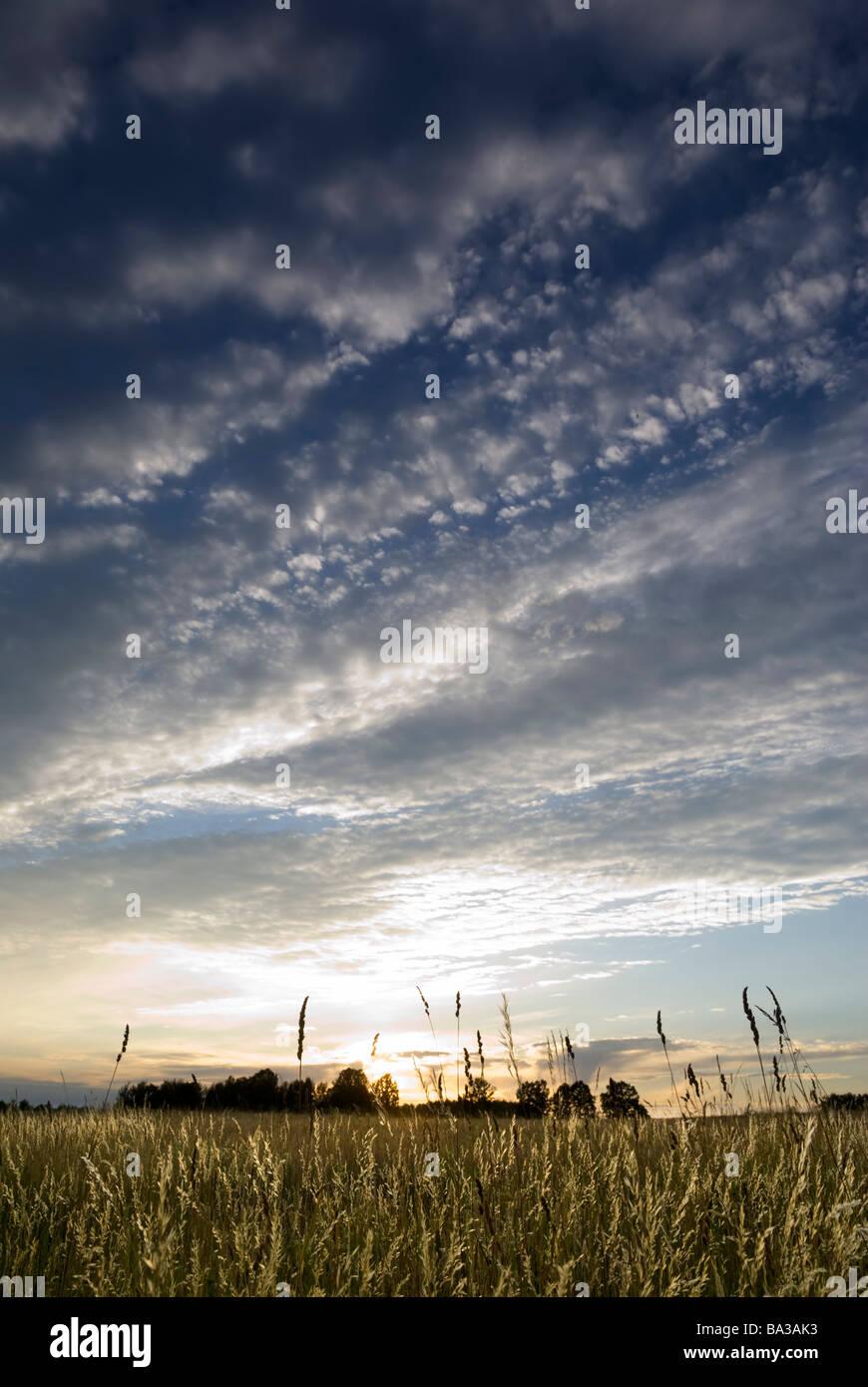 Sun setting over the wild grasses aRGB Stock Foto