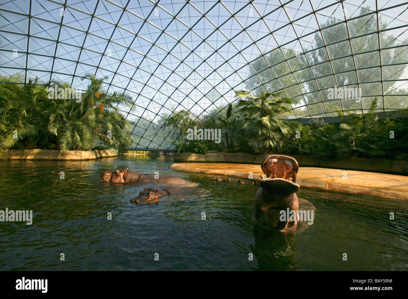 hippopotamus house berlin zoo berlin germany stock photo royalty free image 23954216 alamy. Black Bedroom Furniture Sets. Home Design Ideas