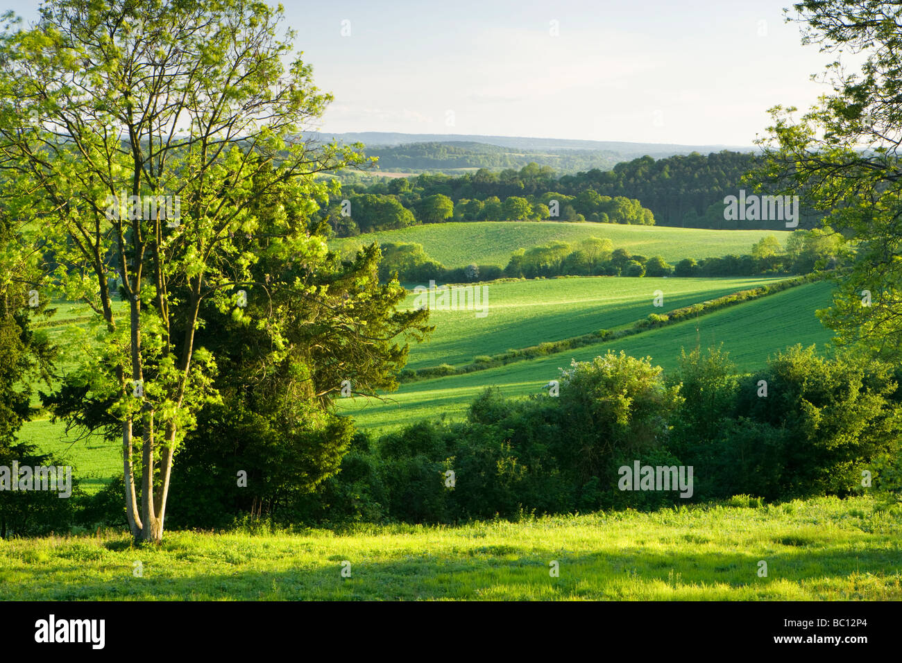 View south from North Downs at Newlands Corner, Surrey, UK Stock Foto