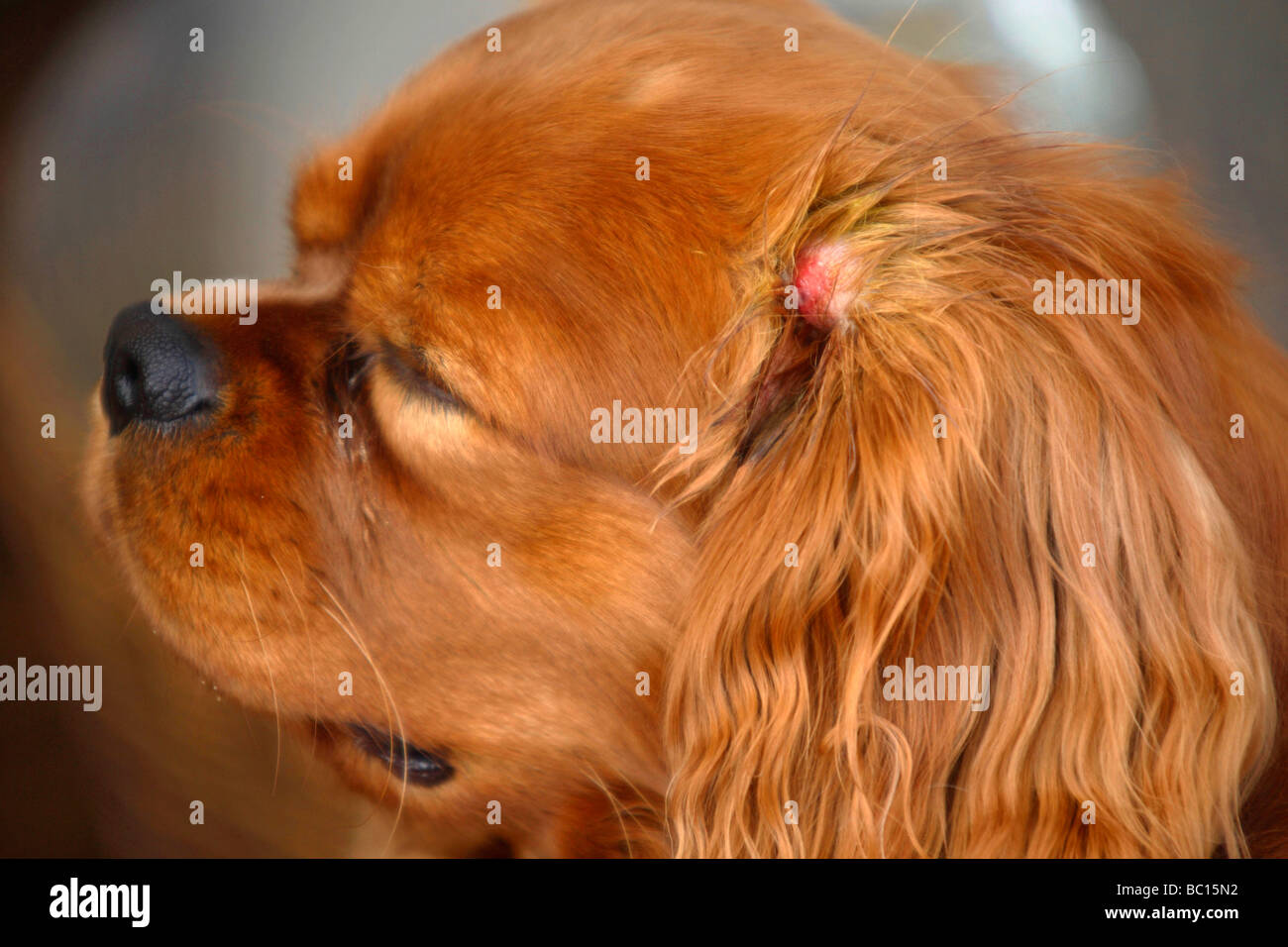 Symptoms From A Tick Bite On A Dog