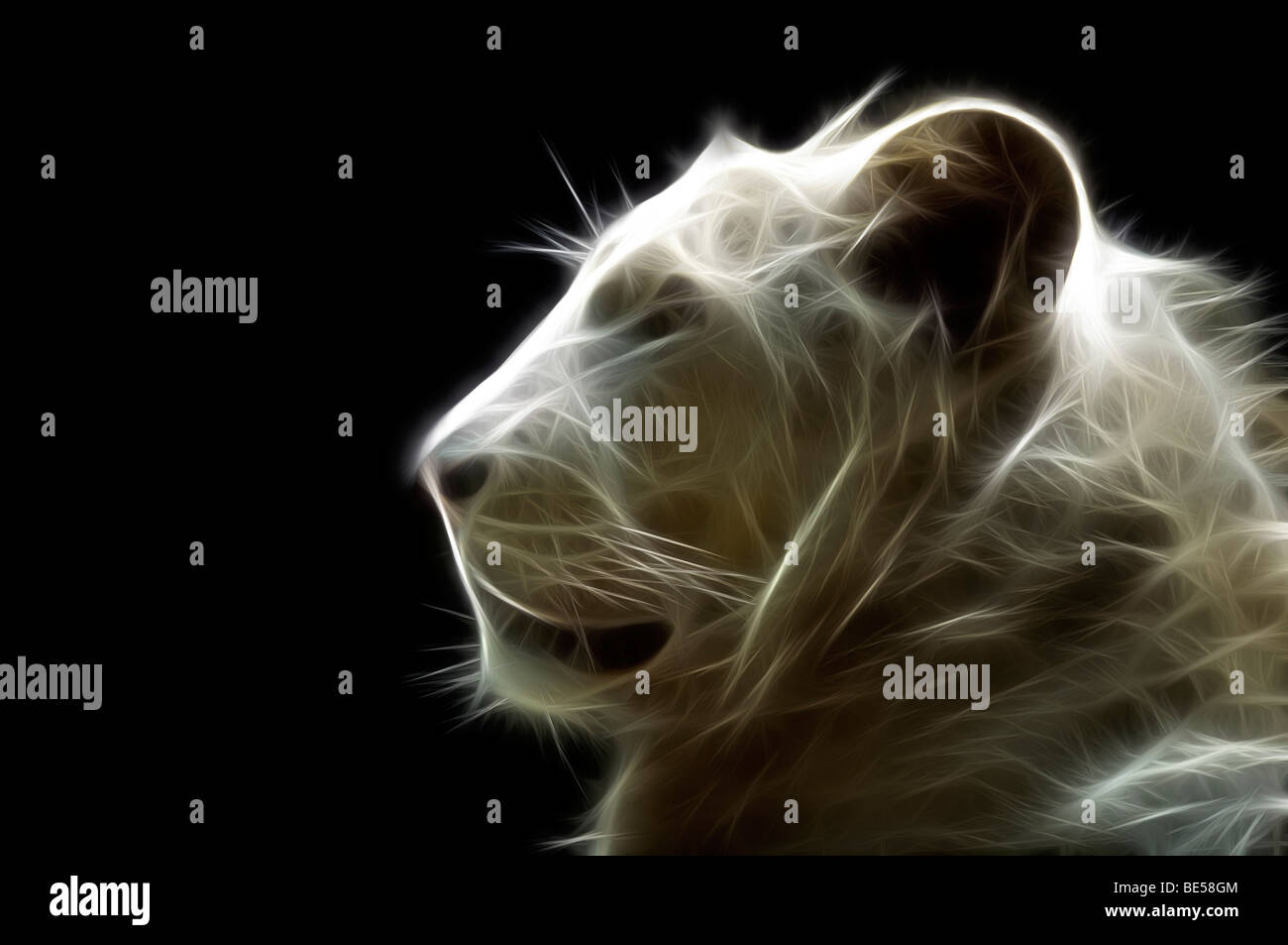 A digitally illustrated head of a white lion (Panthera leo). Portrait d'un lion blanc ( Dessin assisté par ordinateur). Stock Foto