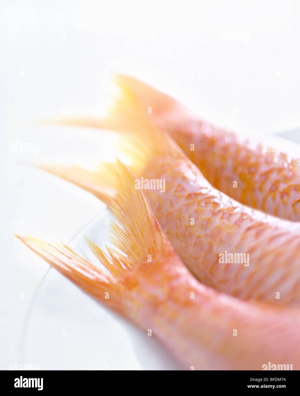 Fish tails Stock Foto
