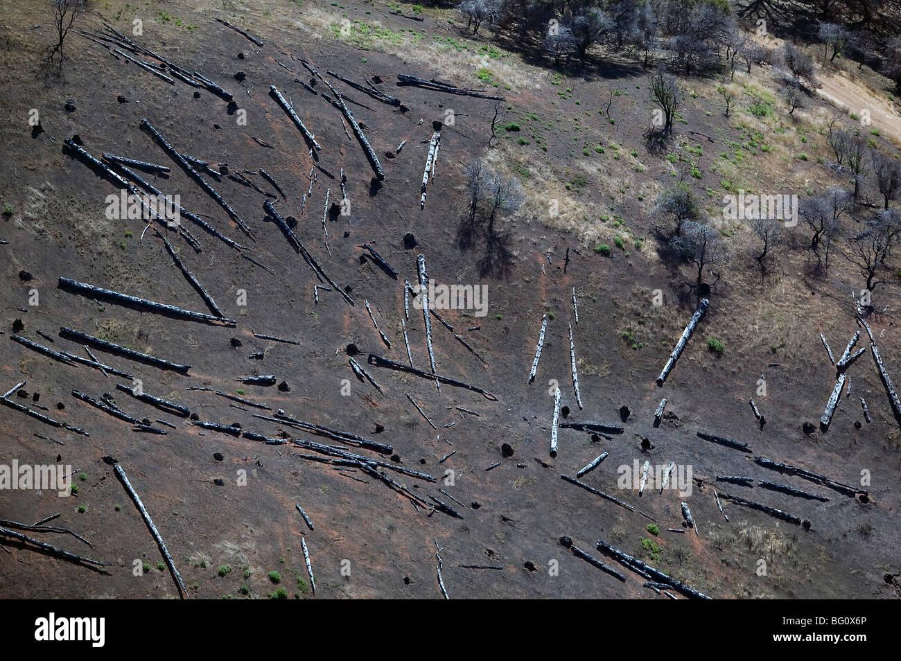 "aerial view clear cutting invasive species Eucalyptus Angel Island ""San Francisco bay"" Stock Photo"