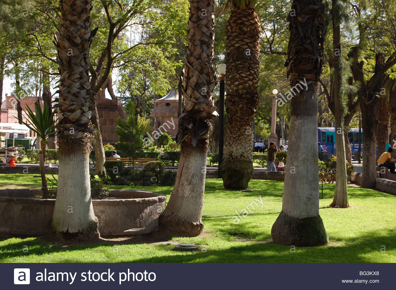 Urban park scene in mexico with white painted tree trunks - White painted tree trunks ...