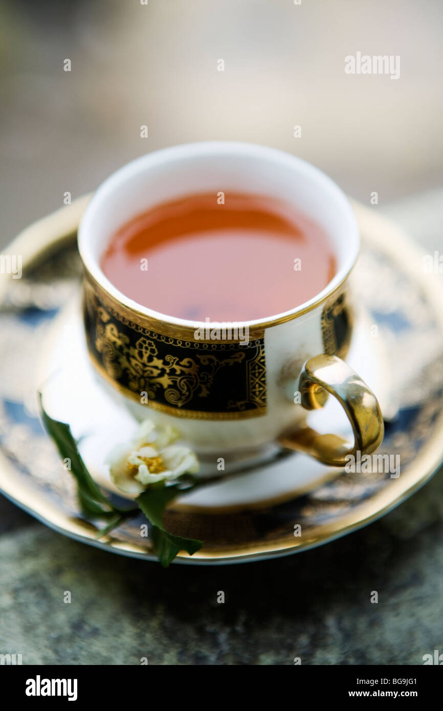 A cup of fresh Darjeeling tea in Darjeeling, India Stock Foto