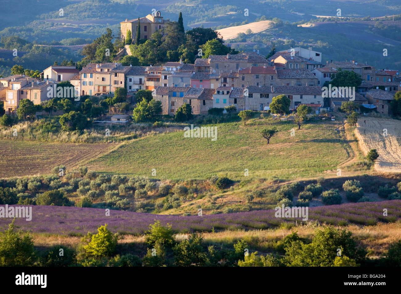 France alpes de haute provence entrevennes lavender for Haute provence