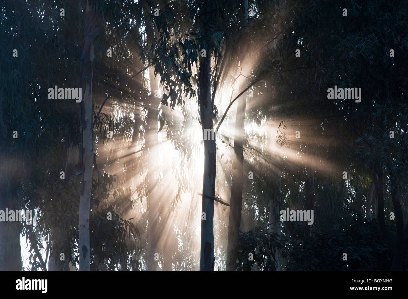 Sunburst through trees in India, Silhouette Stock Foto